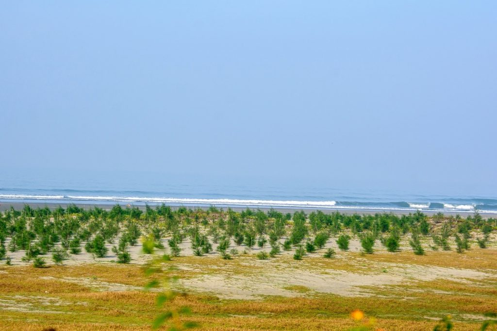 Tree plantation and ecological transformation