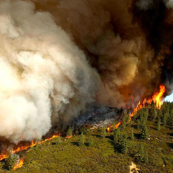 Forest Fire Detection and Monitoring System in Nepal